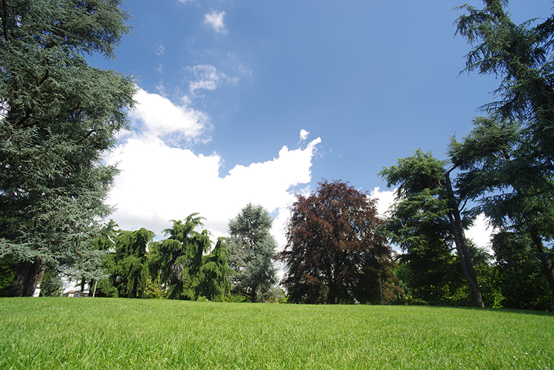 alberi e prato verde