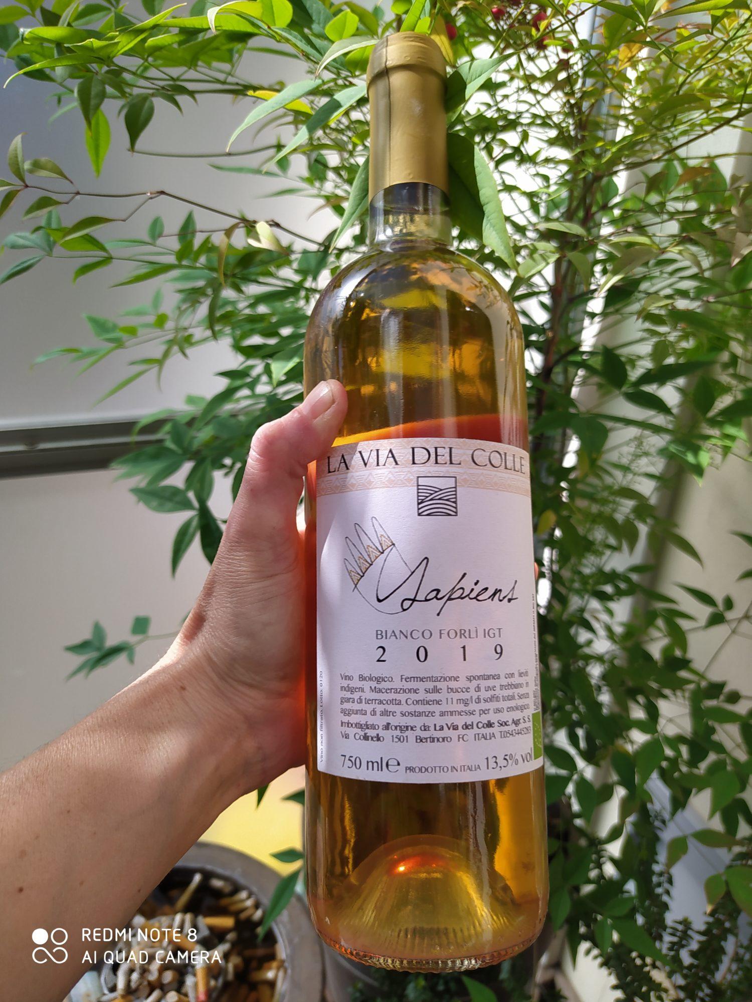 bottiglia di vino bianco e mano che la regge